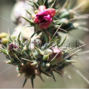 Flor con espinas